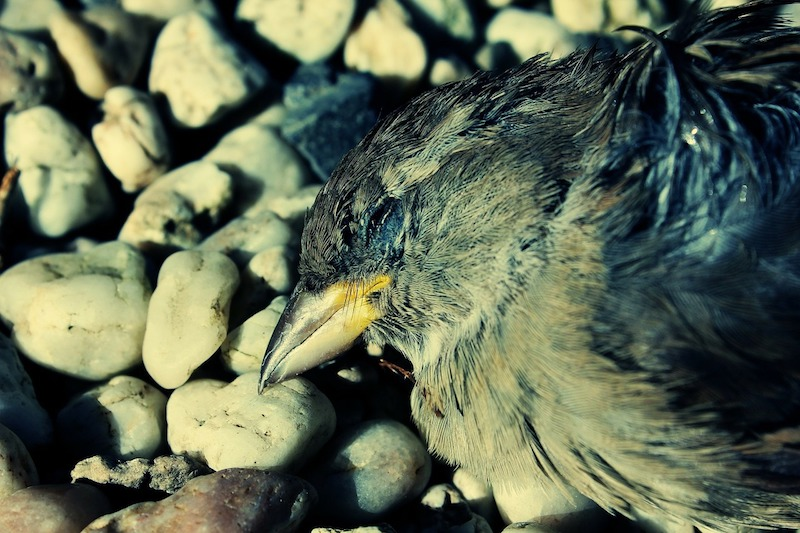 A dead bird on top of rocks